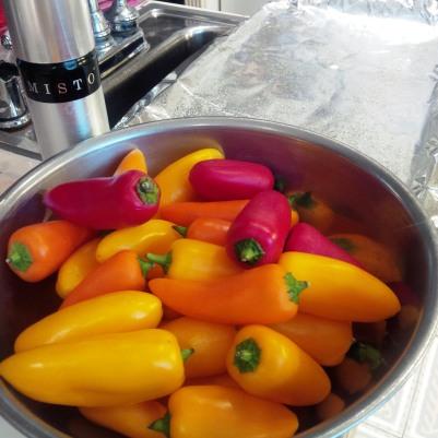 Baby peppers 1.jpg