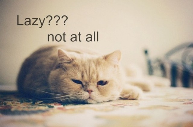 medium_funny-lazy-cat-quotes