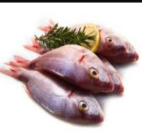 bkd fish 1.png