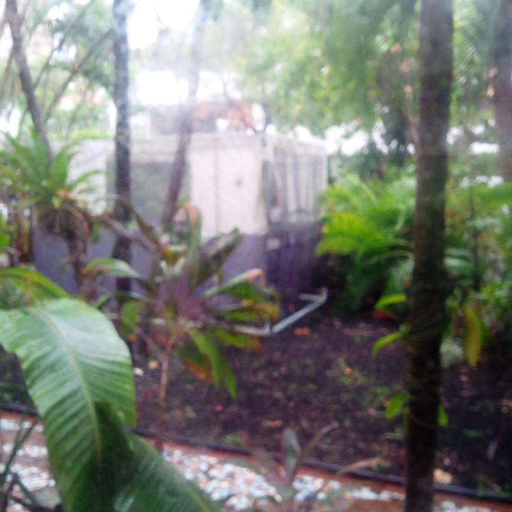 Sukkah in the rain.jpg